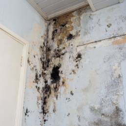 CTR Mold Remediation